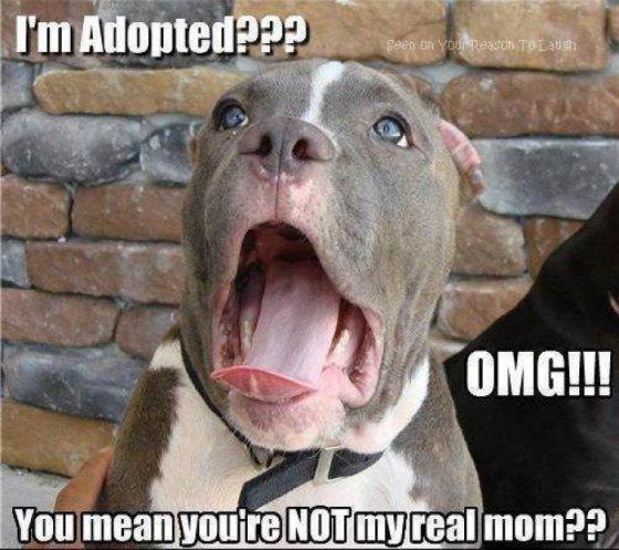 Im-adopted---dog-meme